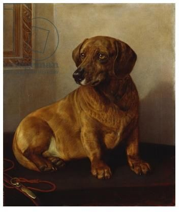 Dacko Was Queen Victoria S Dog This Painting Was Painted For Her