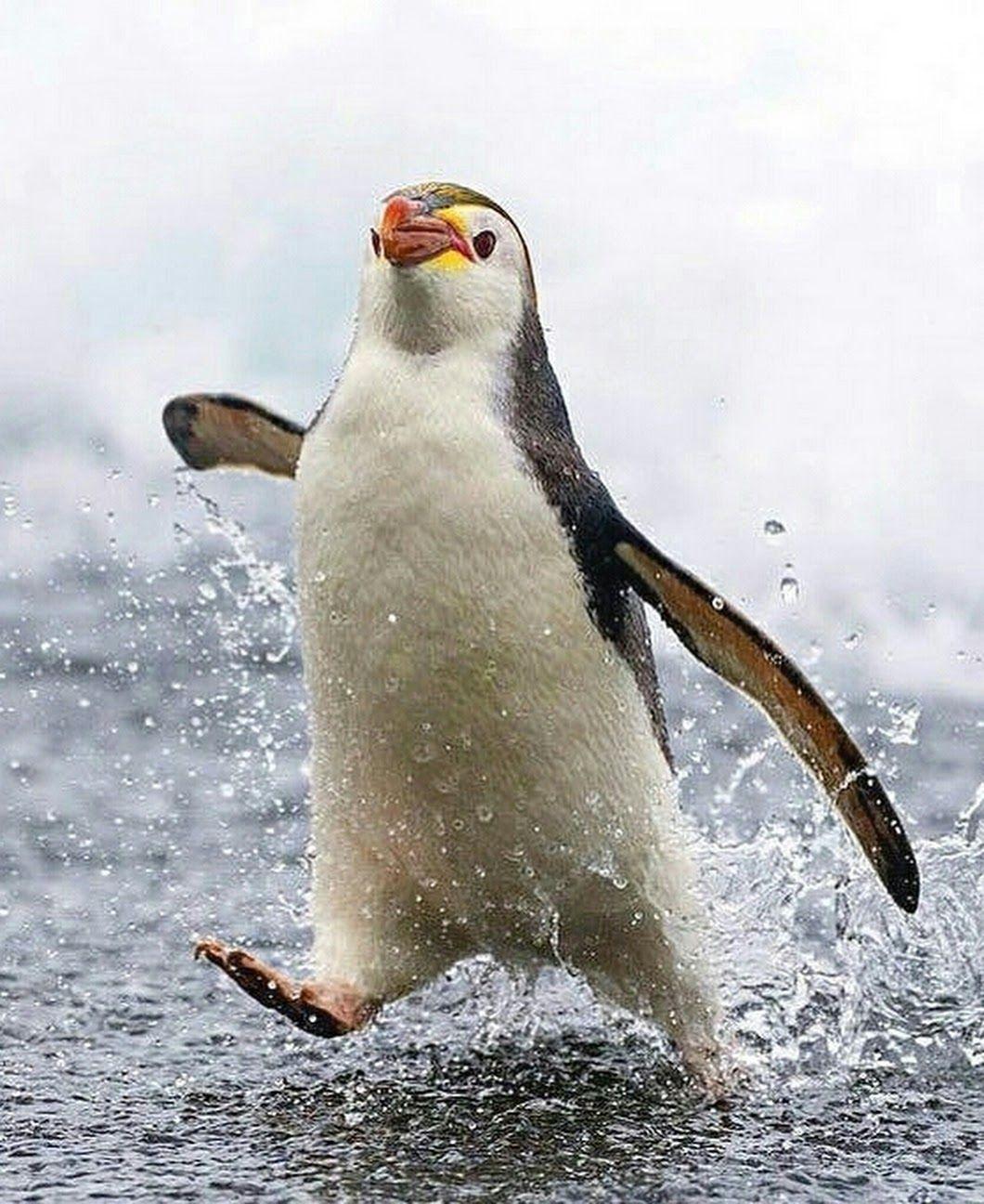 Картинка пингвинов прикольная