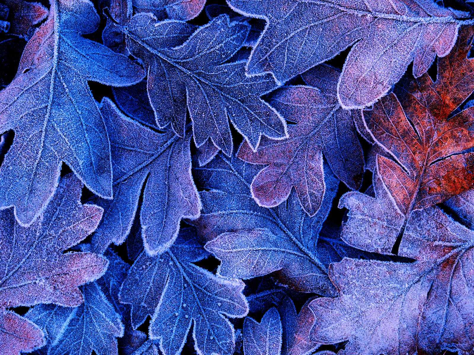 Refreshing Leaf Wallpaper for your Desktop Naldz Graphics