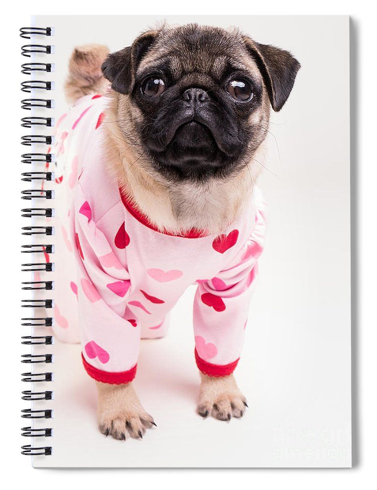Valentine S Day Adorable Pug Puppy In Pajamas Spiral Notebook