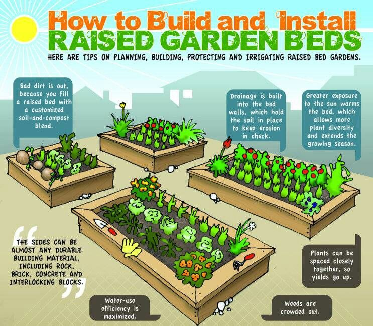 Diy Raised Beds Growing Food Anywhere Info Graphic Gardens Vegetable Garden And Raising