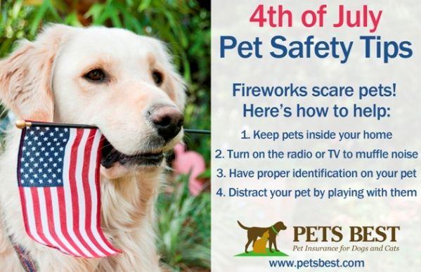 4th Of July Pet Safety Tips Pet Safety Big Dog Care Best Pet Insurance