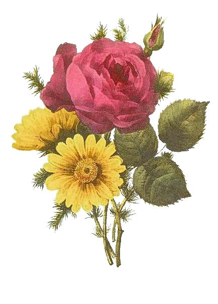 Pin On Grabados De Flores
