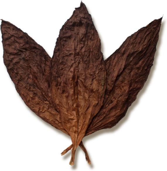Tobacco Leaf Google Search Tobacco Leaf Cigars Cigar Shops