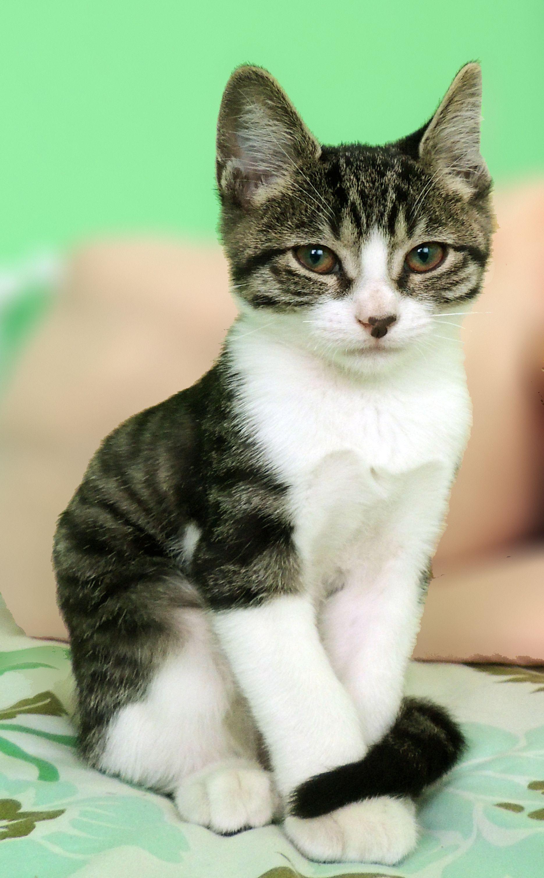 itty bitty kitty Animals, Kitty, Itty bitty