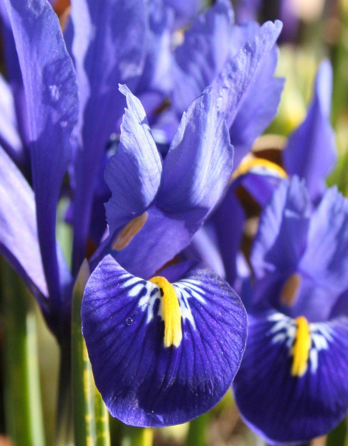 Pin oleh tytti di Flowers