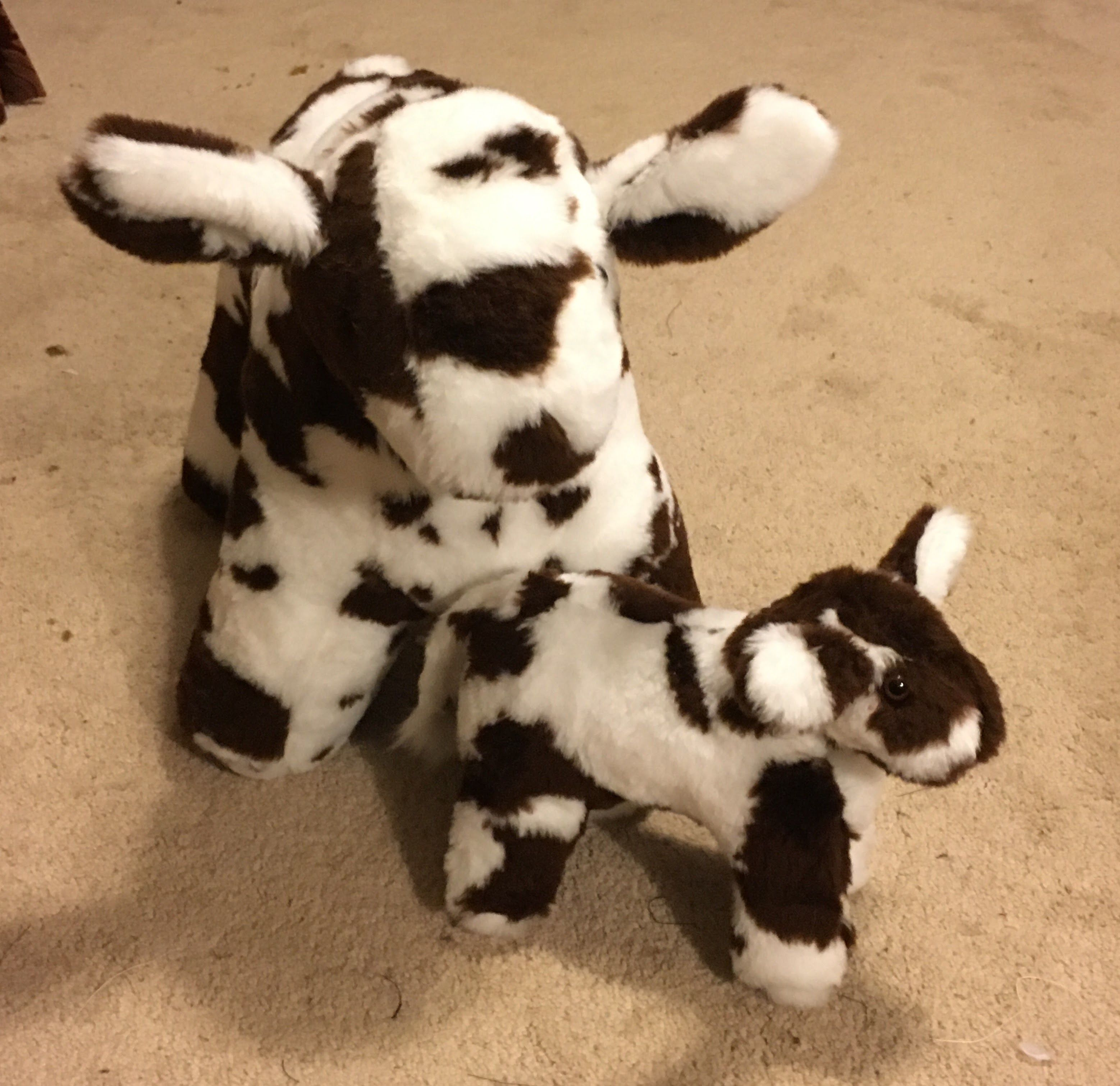 Shorthorn And Baby Calf Pair