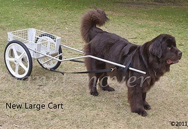 Carts & Harnesses for Sale: CUSTOM DOG CARTS for Drafting Dog ...