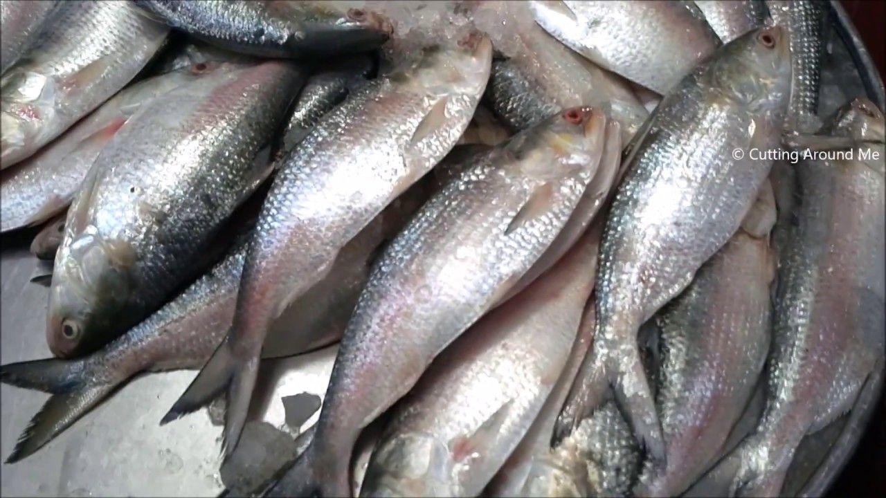 World Largest Fish Market In Bangladesh Morning Fresh Alive Fish