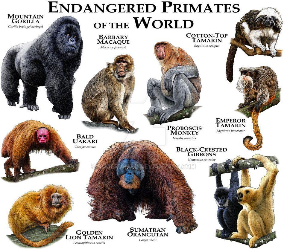Fine art illustration of various species of endangered