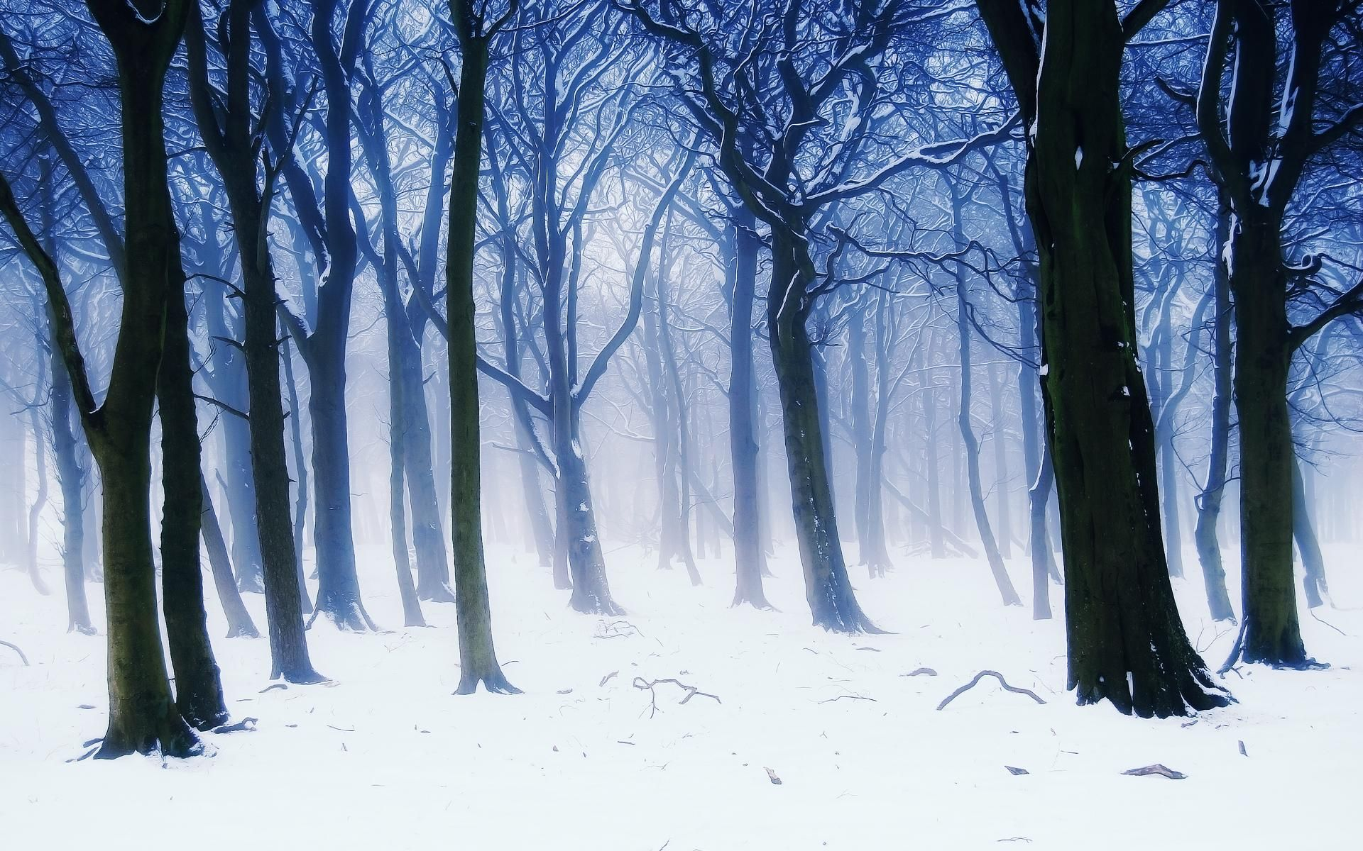 Download hd wallpapers of cold fog landscapes hd wallpaper trees