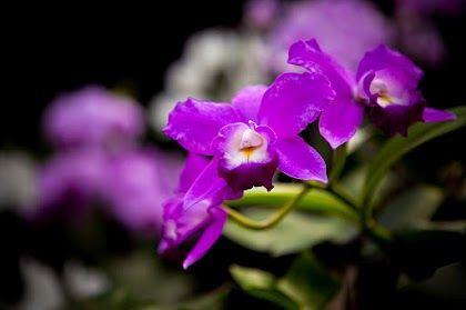 Orquidarium - #orchids - #orquideas - #love