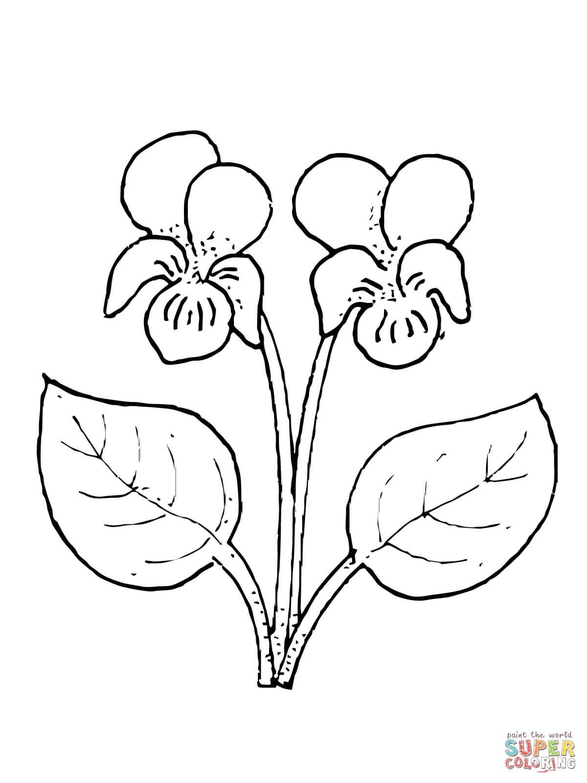 Violet Flower Super Coloring Flower Coloring Pages Free