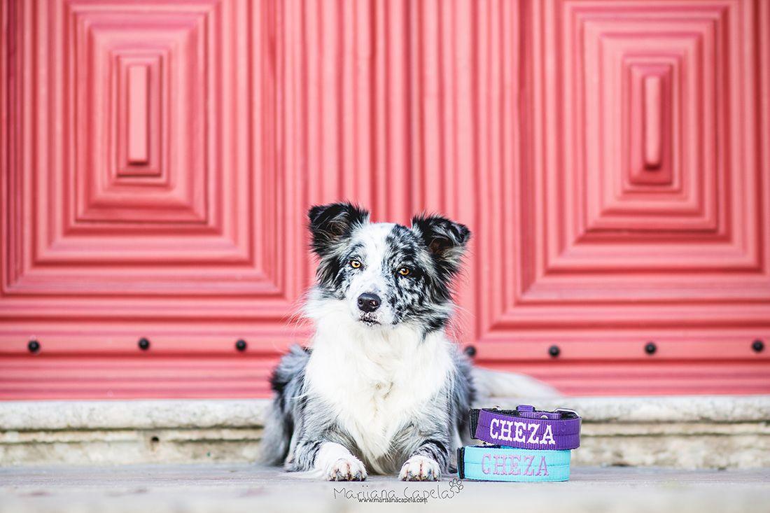 Mariiana Capela With Images Animal Photography Dog