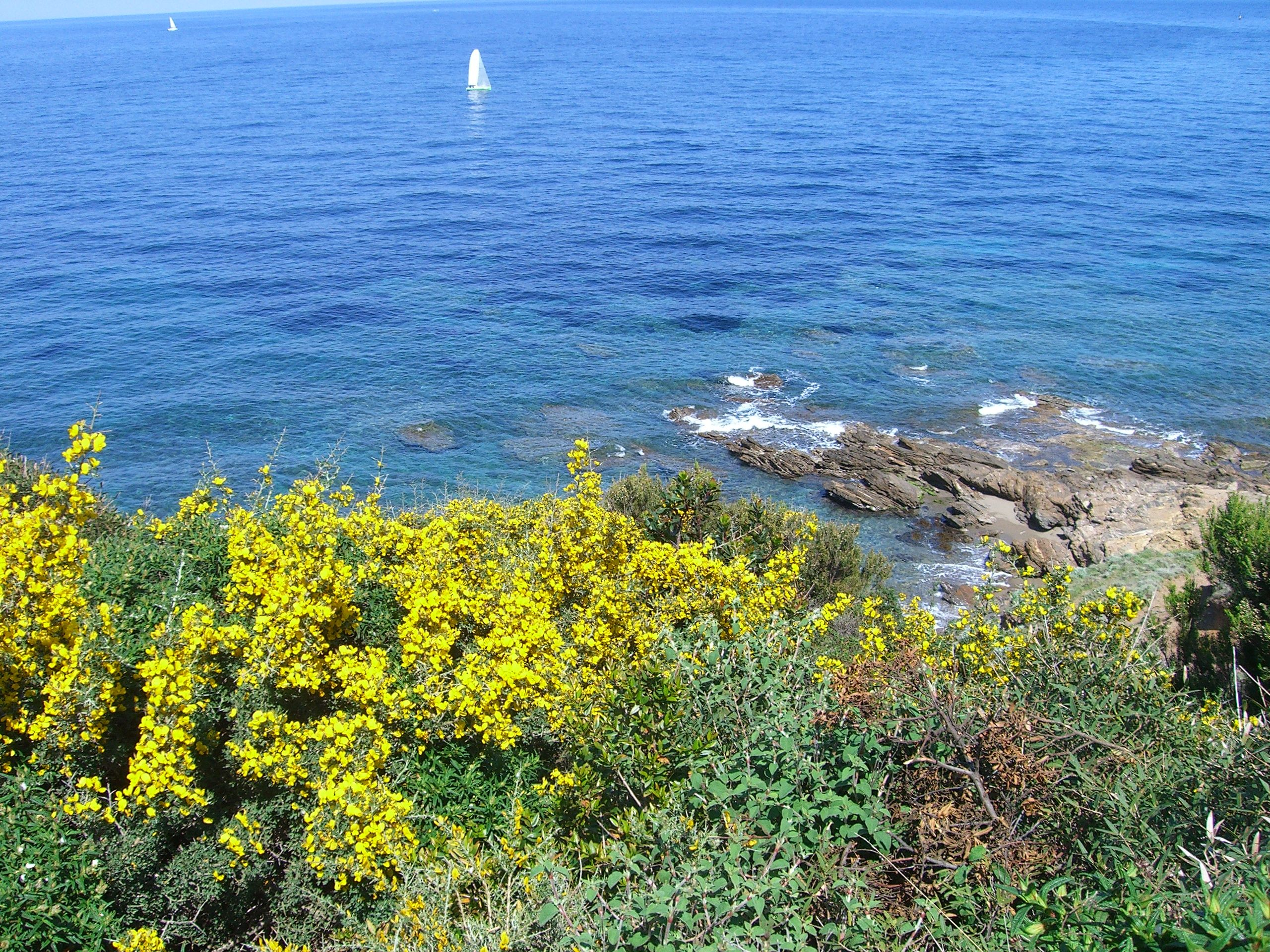 Fleurs de bord de mer dans le cap corse