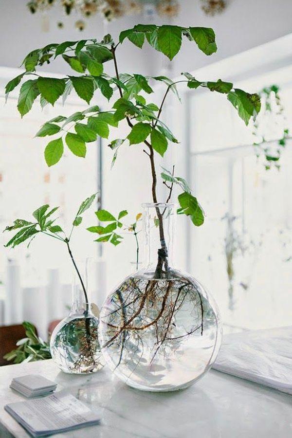 La plante verte d 39 int rieur plantes vertes for La plante verte