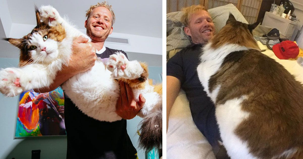 Meet Samson, a giant cat who weighs 28 pounds and is