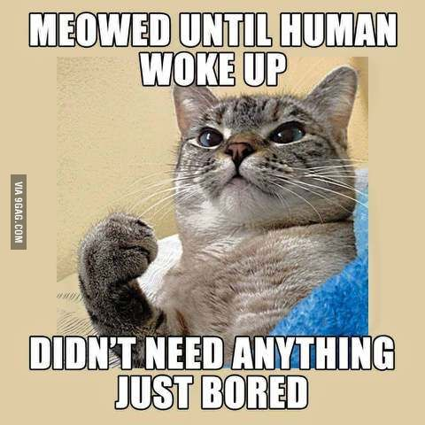 Every night... - 9GAG