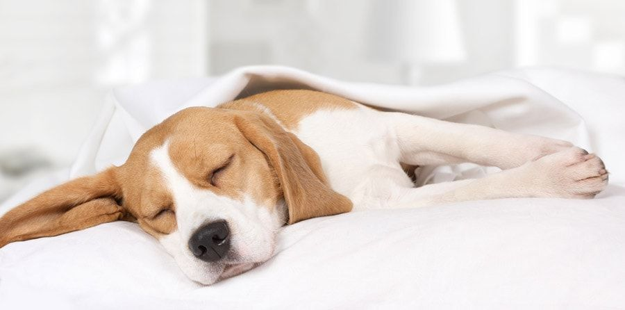 How Many Hours Do Dogs Sleep Each Day? Why Do Dogs Sleep