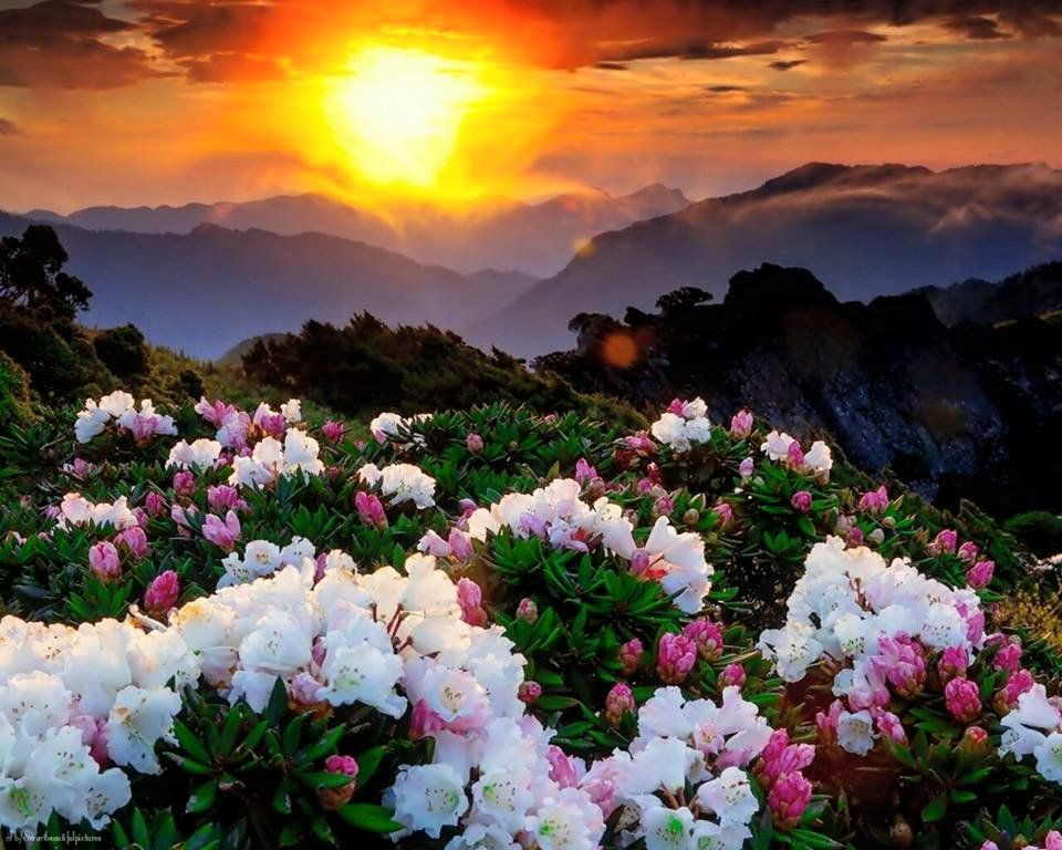 EL SHADDAI, THE ALL SUFFICIENT ONE   And all the children of Israel murmured   is part of Flowers nature -