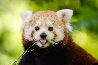 صور كيوت الجزء الاول صور حيوانات مدونة صور احترافية وصور مميزة Cute Animal Photos Animal Photo Animals Beautiful