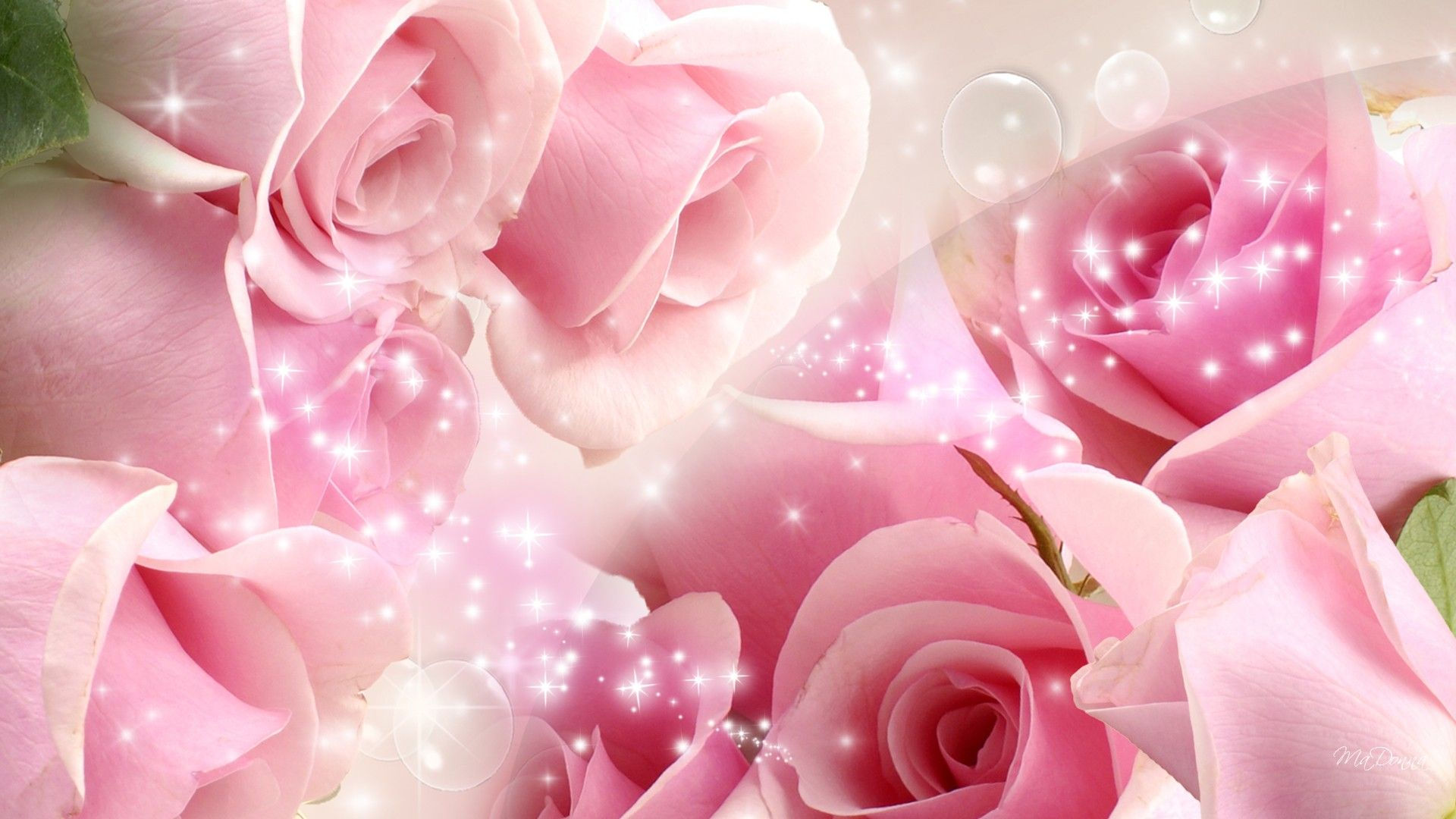 Roses So Pink 104521 Jpg 1920 1080 Beautiful Pink Roses Flower Wallpaper Rose Wallpaper