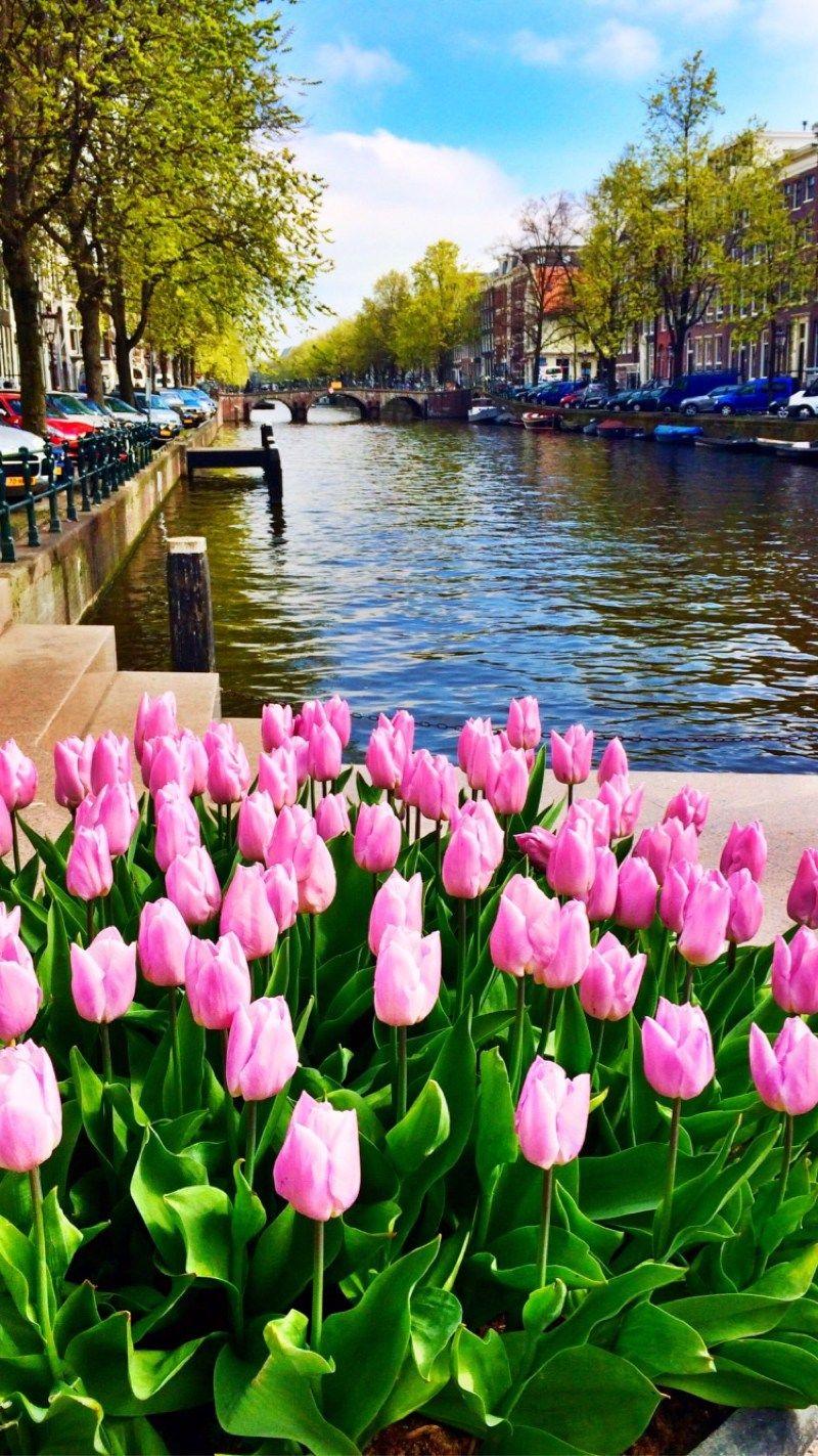 0dd1c9bc65967c3016b4f924dbeb4e94 - Tours From Amsterdam To Keukenhof Gardens