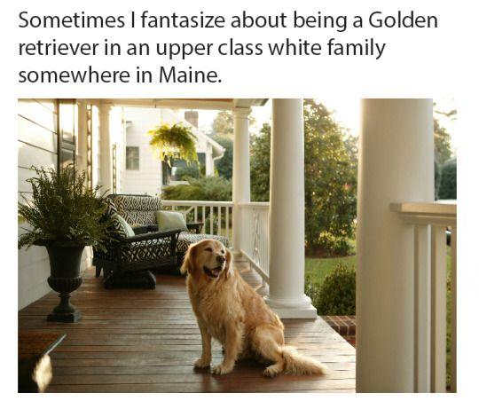 Sometimes I Fantasize About Being A Golden Retriever In An Upper