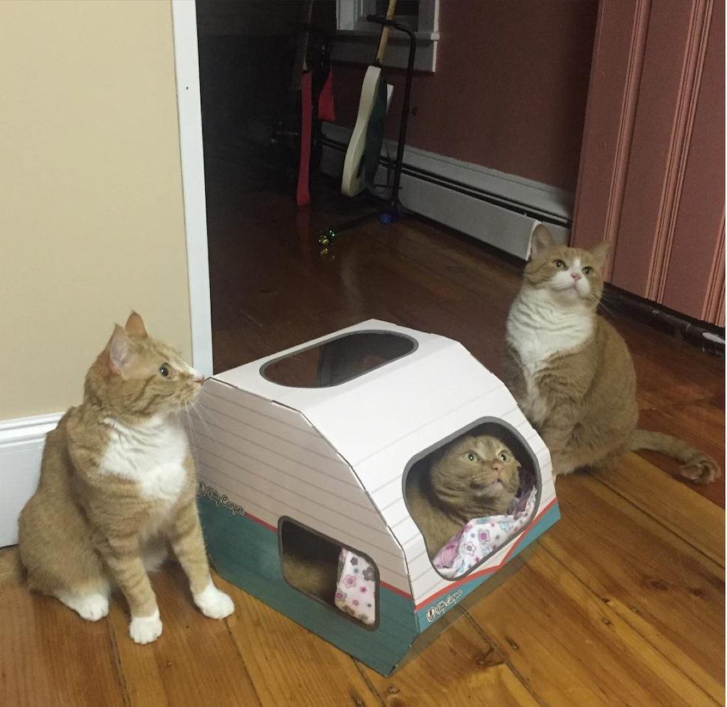 It S My Turn In The Kitty Camper Ha Ha Great Cat Caravan Trailer For Your Indoor Cat Its Perfect As A Cat Bed Ca Cardboard Cat House Diy Cat Toys Cat
