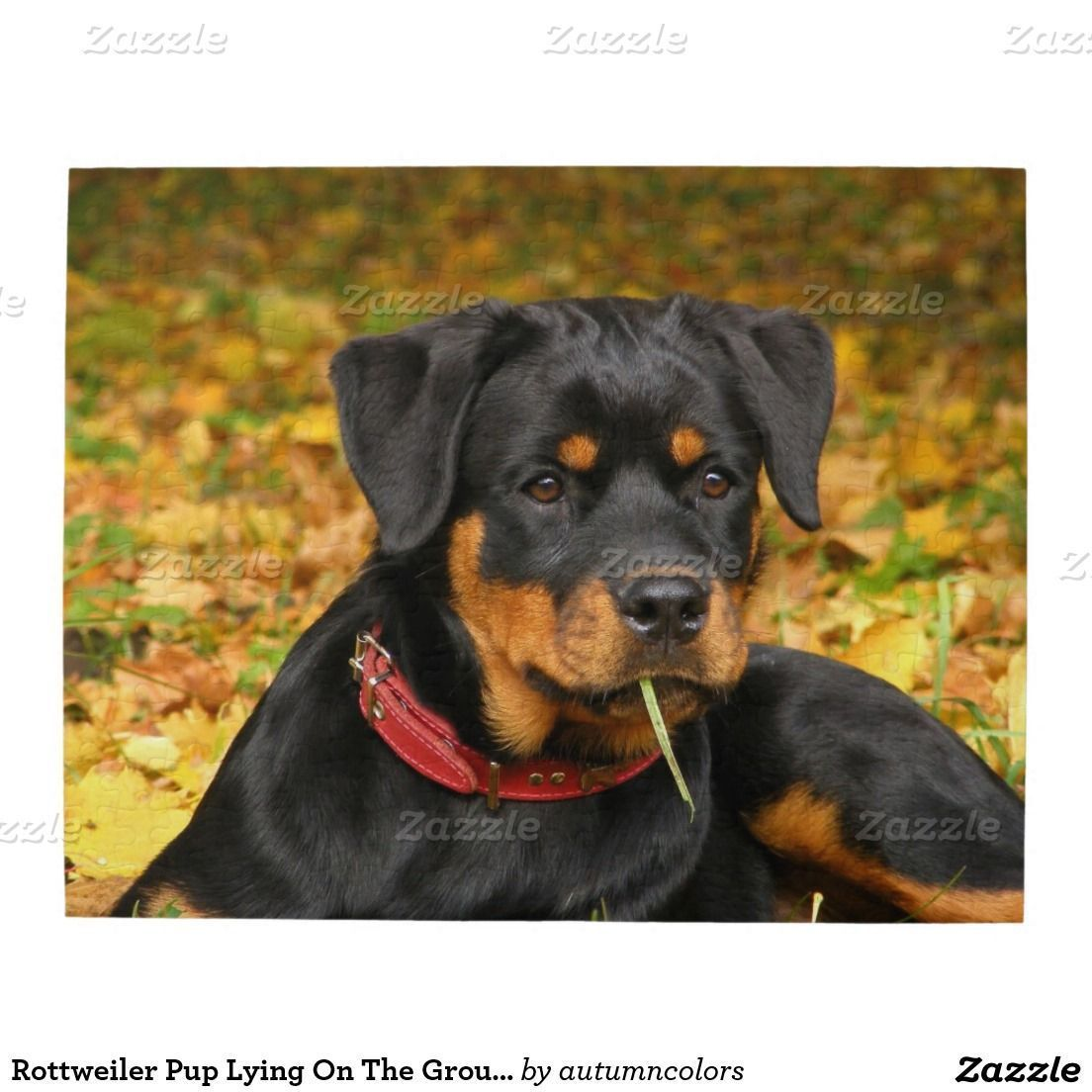 Rottweiler Rottweiler Pup Lying On The Ground In Forest Puzzle
