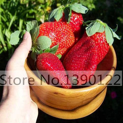 300/가방 거대한 딸기 씨앗, 희귀, 큰 같이 복숭아, Fragaria ananassa L. 막시무스 딸기 과일 씨앗 홈 정원