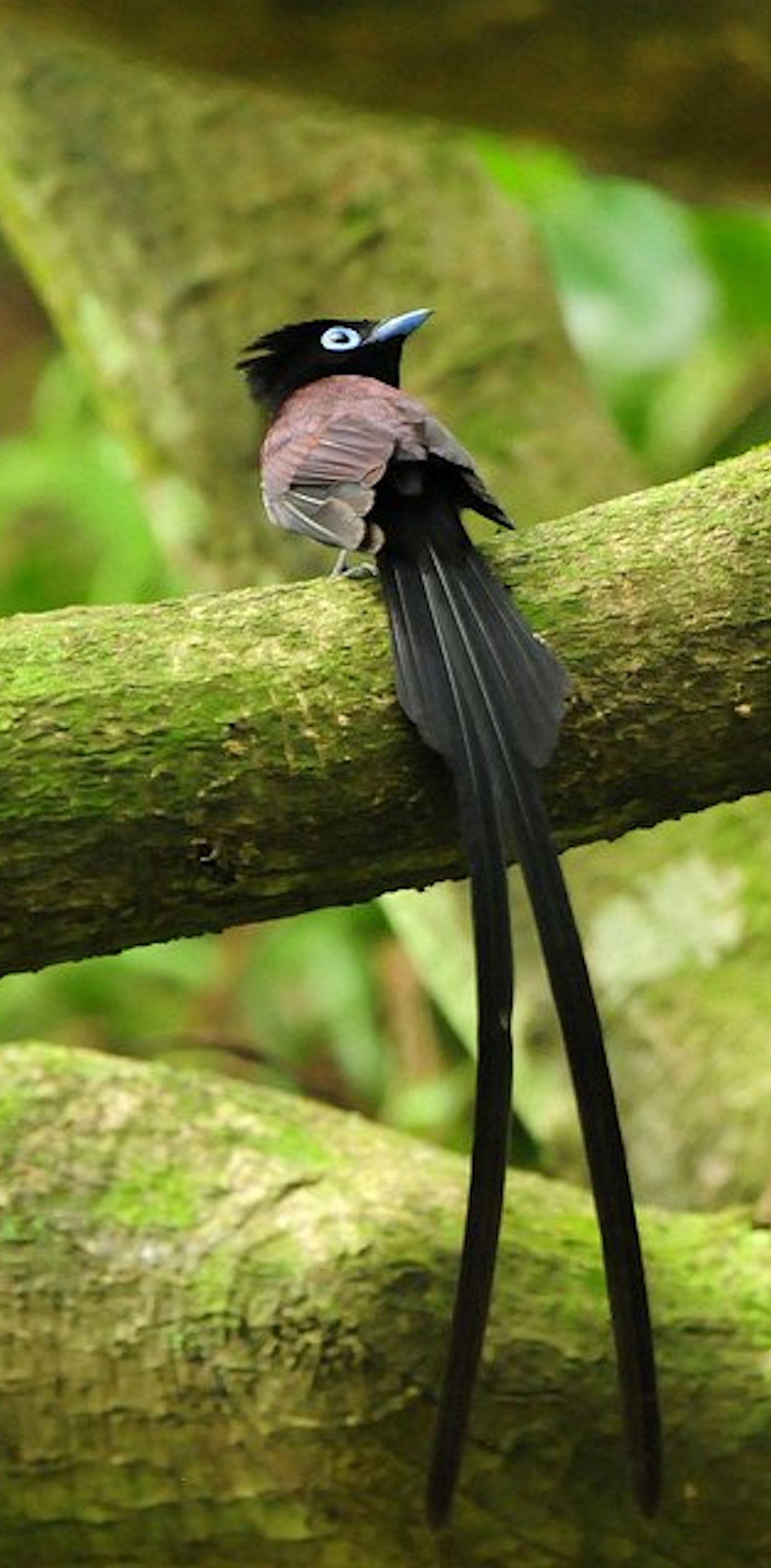 Pin on Birds of Paradise
