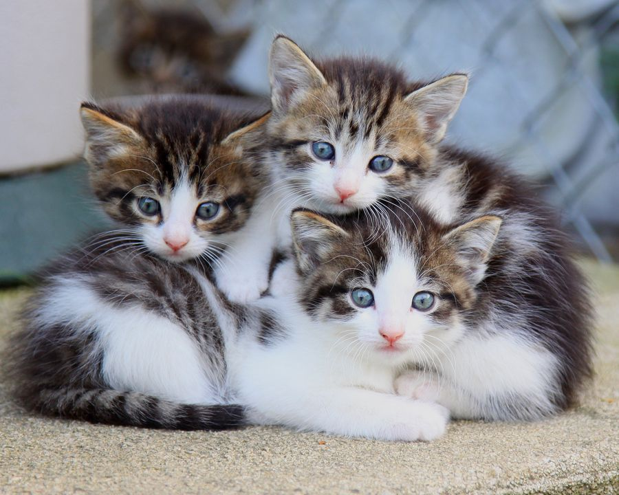 Kittens Those Eyes Kittens Cutest Cute Cats Beautiful Cats