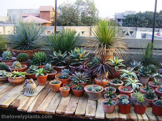 Here Is A Sneak Preview Of My Succulent Garden. I Will Post A Detailed  Virtual