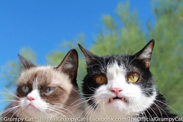 """""""What are we doing tonight, Grumpy?"""" """"What we do EVERY night, Pokey. Try to take over the WORLD!"""""""