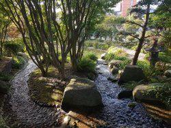 jardin japonais le havre consultez 37 avis articles et 25 photos de jardin - Jardin Japonais Le Havre