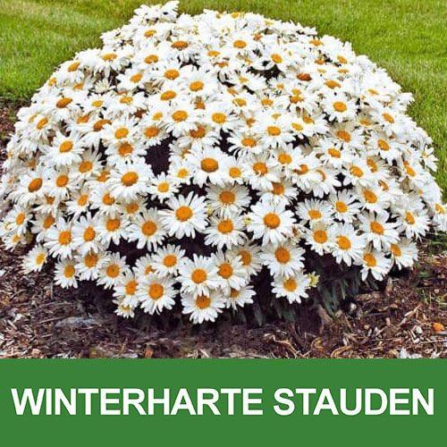 Winterharte Stauden Garten Winterharte Pflanzen Winterharte