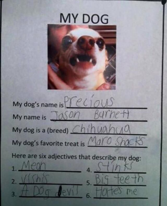 Funny homework pictures