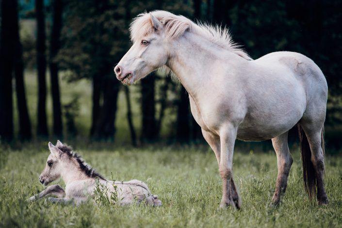 Fotos Pferde In Der Natur I In 2020 Pferde Schone Pferde