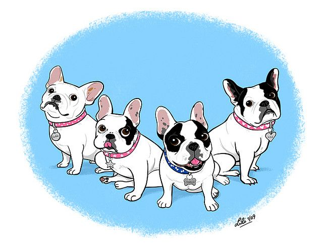 By Lili Chin French Bulldog Bulldog Drawing French Bulldog Puppies