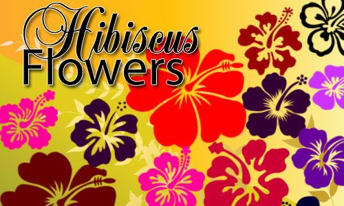 Free And Fantastic Hibiscus Flower Photoshop Brushes Photoshop Brushes Free Free Photoshop Photoshop Brushes