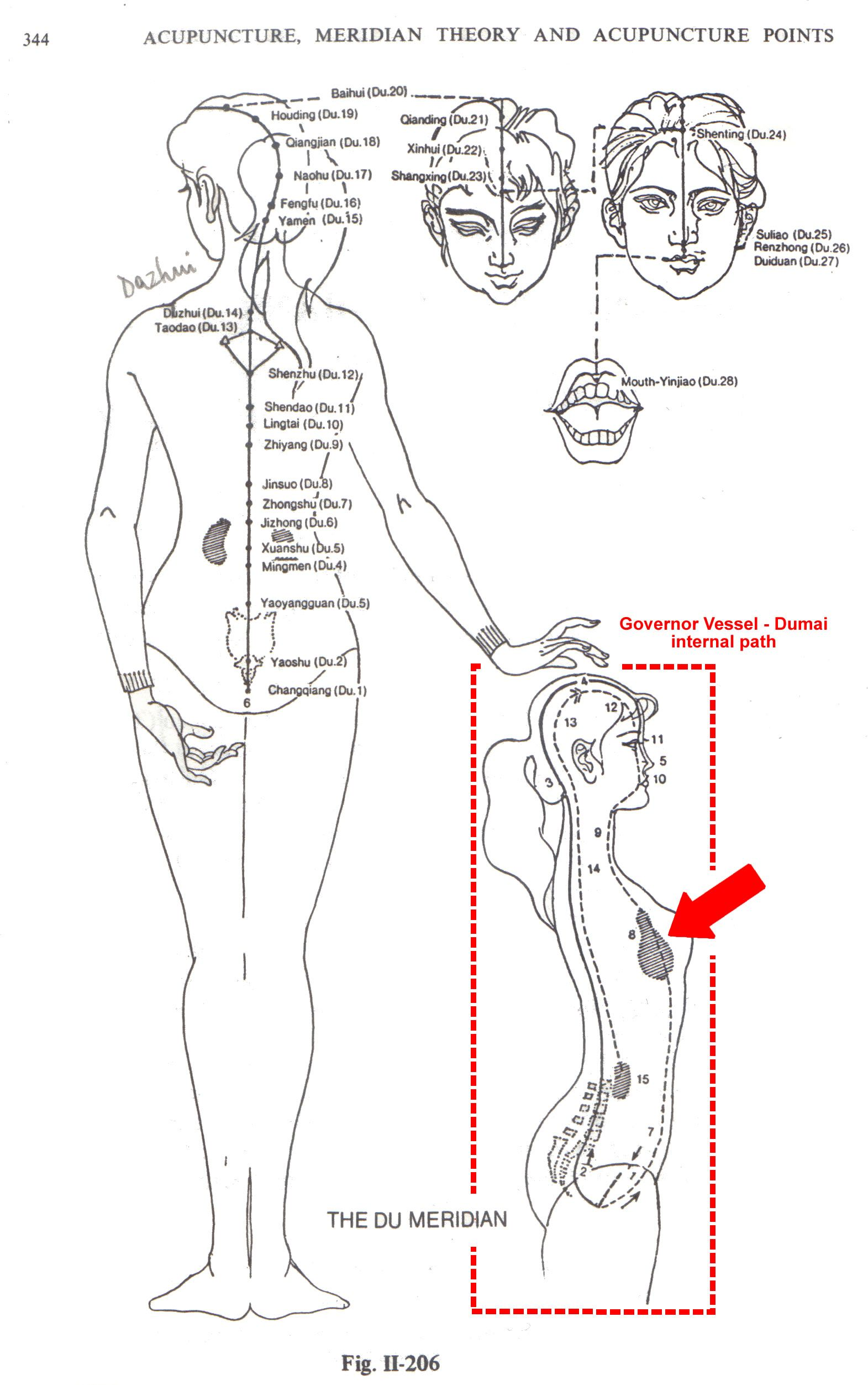 new acquisition in back-shu points anatomy knowledge   Rosalba ...