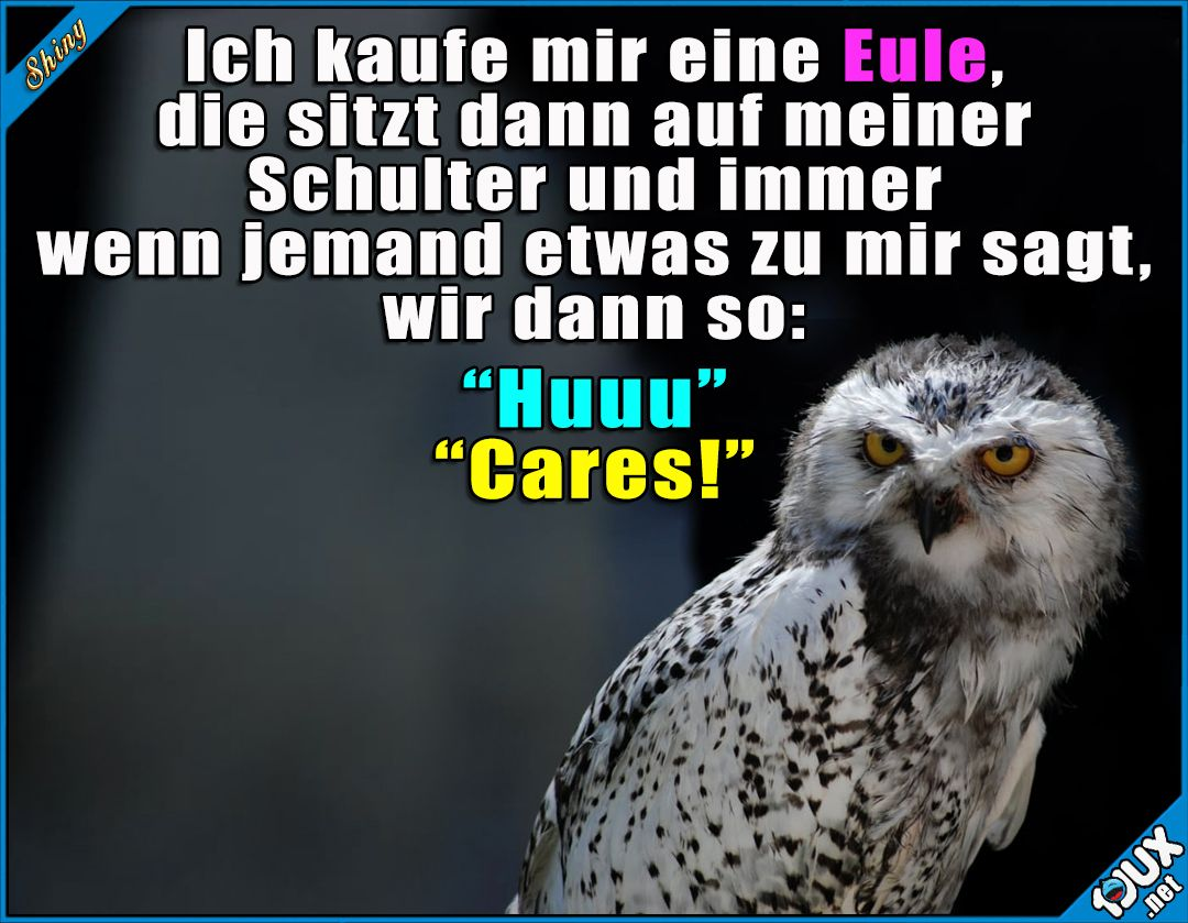 So eine Eule brauch ich :) Lustige Sprüche #lustig #Sprüche #1jux