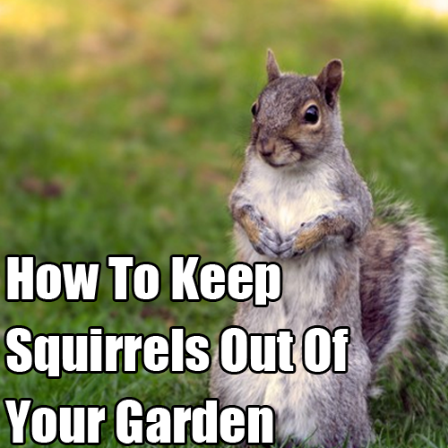 How to keep squirrels out of raised garden garden ftempo for How to keep squirrels out of my garden