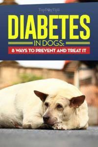 Tips for Dealing with Diabetes in Dogs