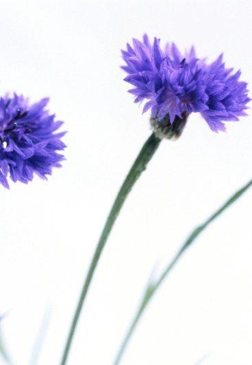 Desciframos Cual Es El Significado De Las Flores Sweet Things