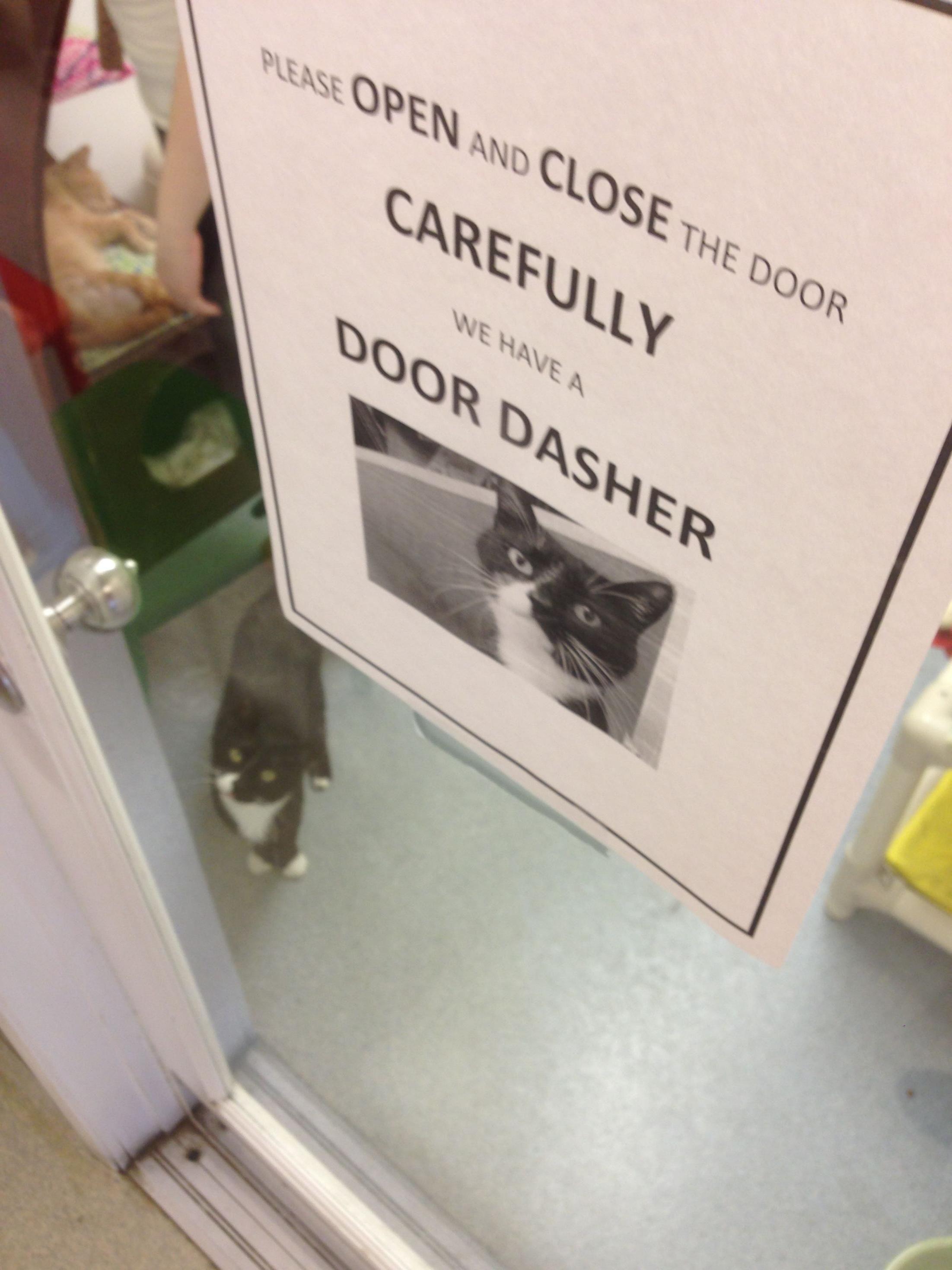 Animal Shelter Sign Wasn T Lying Imgur Funny Pictures Funny Animals Funny Animal Pictures