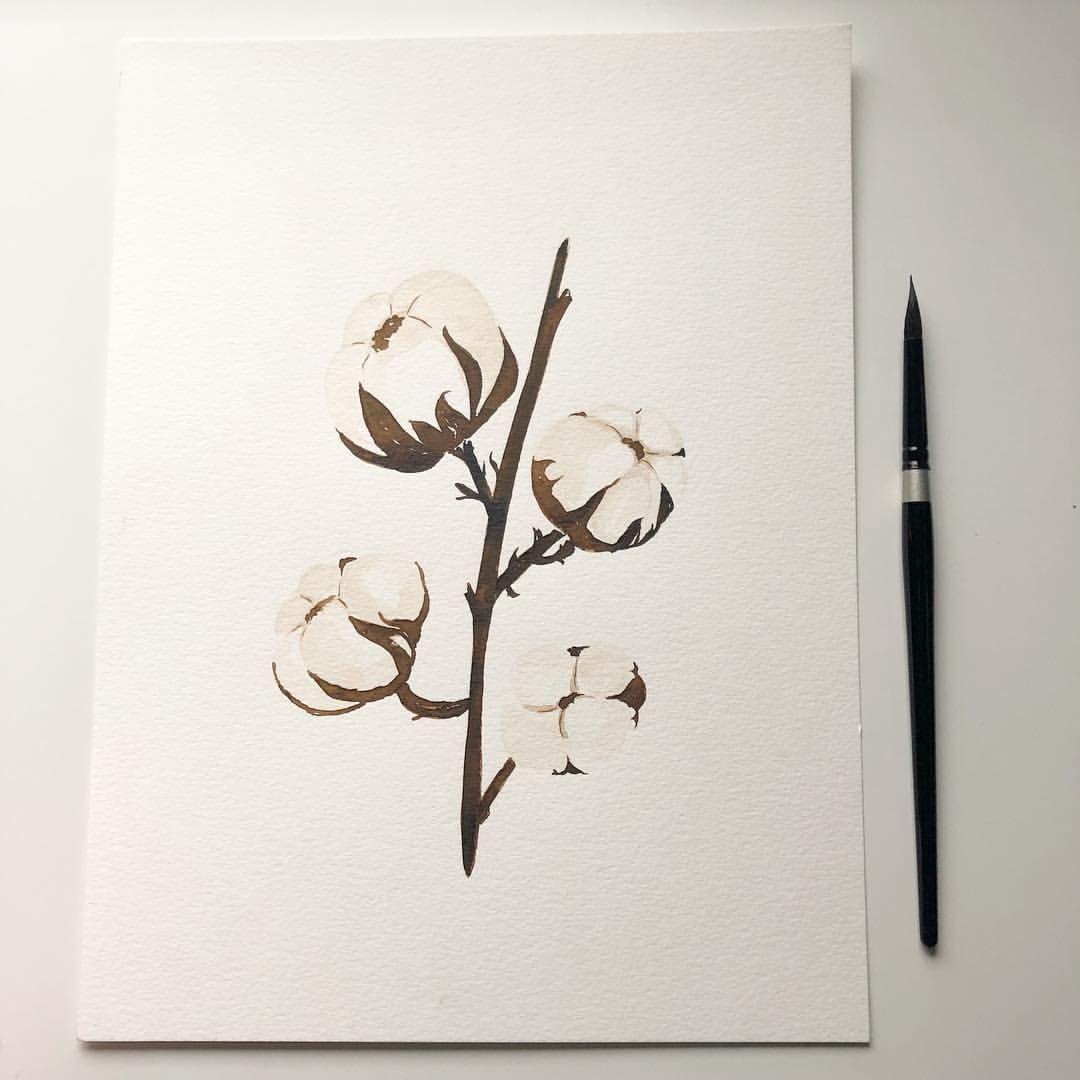 زهرة القطن ألوان مائية تصويري صباح ٢٠١٩ زهرة القطن 2019 Watercolors Instadrawing Cottonflower