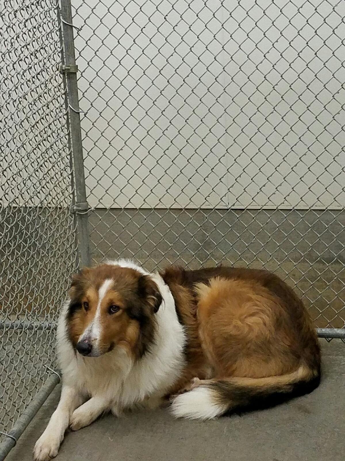 Adopt Jack On Dog Adoption Animal Projects Save Animals