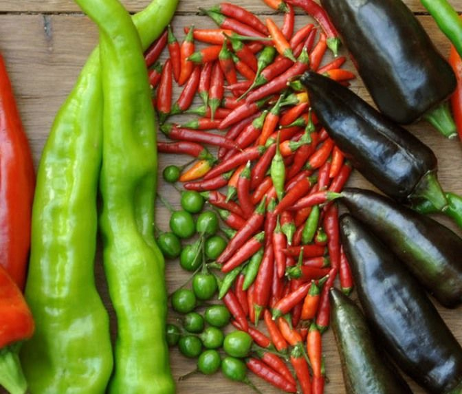 Cayenne, chili and jalapeño peppers have an important ...